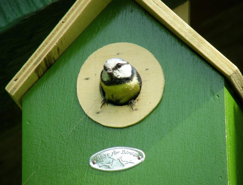 tuto pour fabriquer votre propre cabane oiseaux mag la cabane en l 39 air. Black Bedroom Furniture Sets. Home Design Ideas